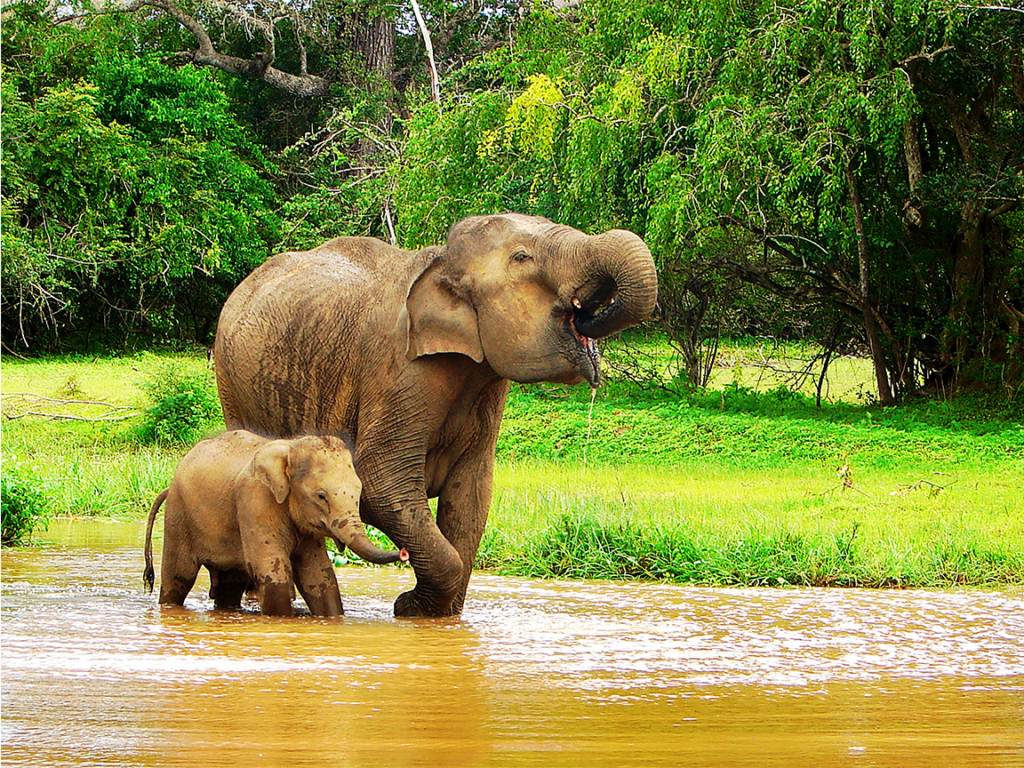 Elephant and baby drinking water